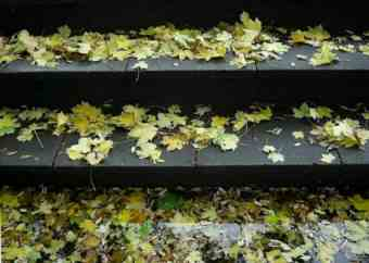 Steps covered in autumn leaves