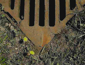 Flowers growing in drain