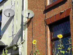 Two satelite dishes and two sunflowers in the Sun.