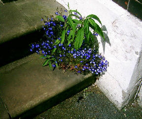 Pretty flower growing on some steps